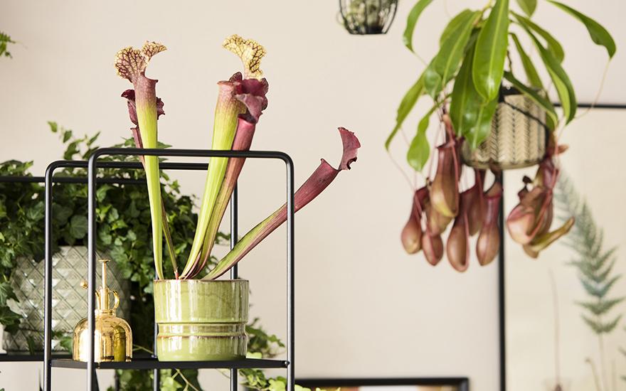 Tips hur du kan inreda ditt hem med växter