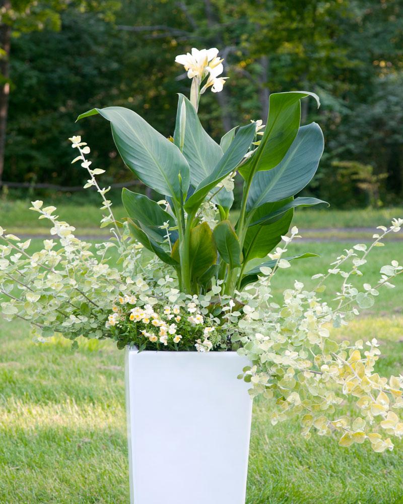 Plantering i kruka