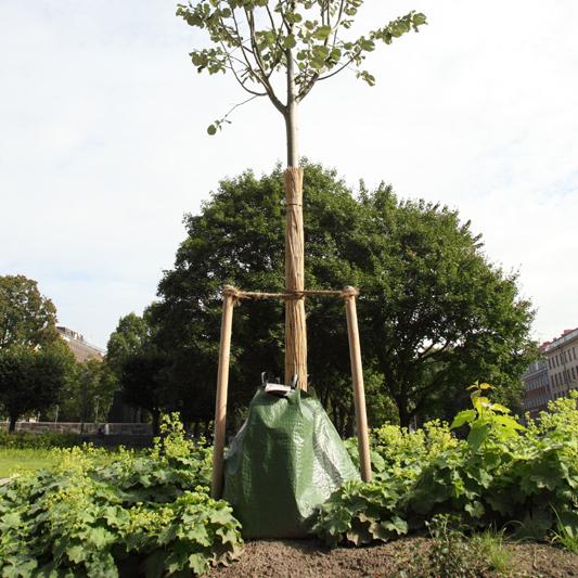 Litet träd nyplanterat