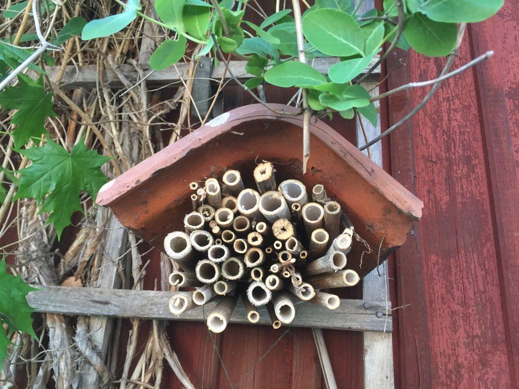 Fördelar för biologisk mångfald med ett insektshotell