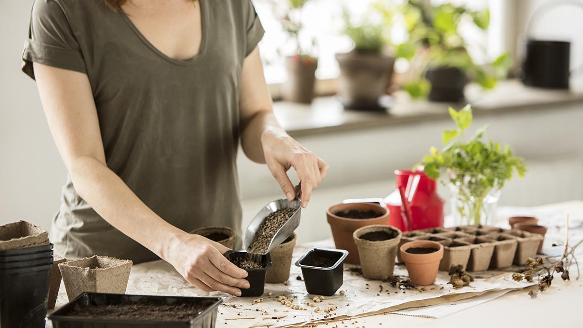 Dressa dina frösådder med odlingssand