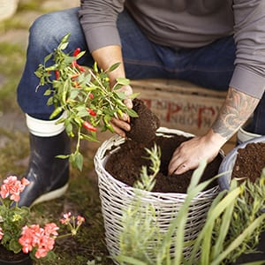 Enkla instruktioner hur du fyller upp med jord vid krukplantering