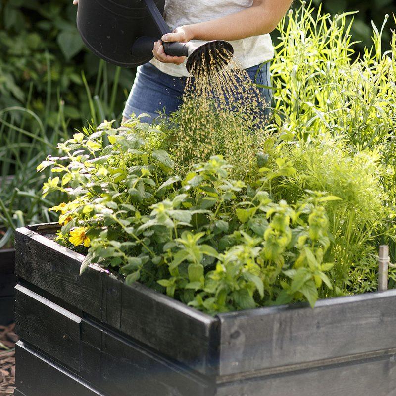 Pallkrage med växter i som vattnas