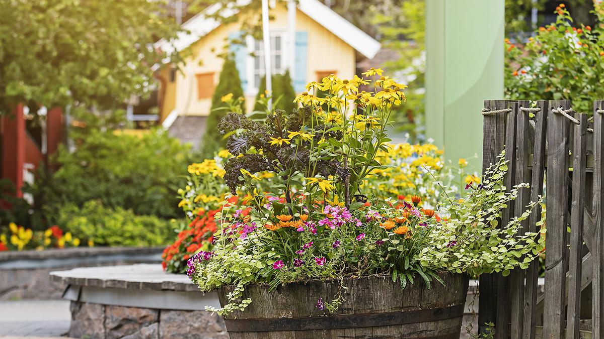 Liseberg använder Hasselfors Garden jordar för att plantera sina berömda sommarblommor