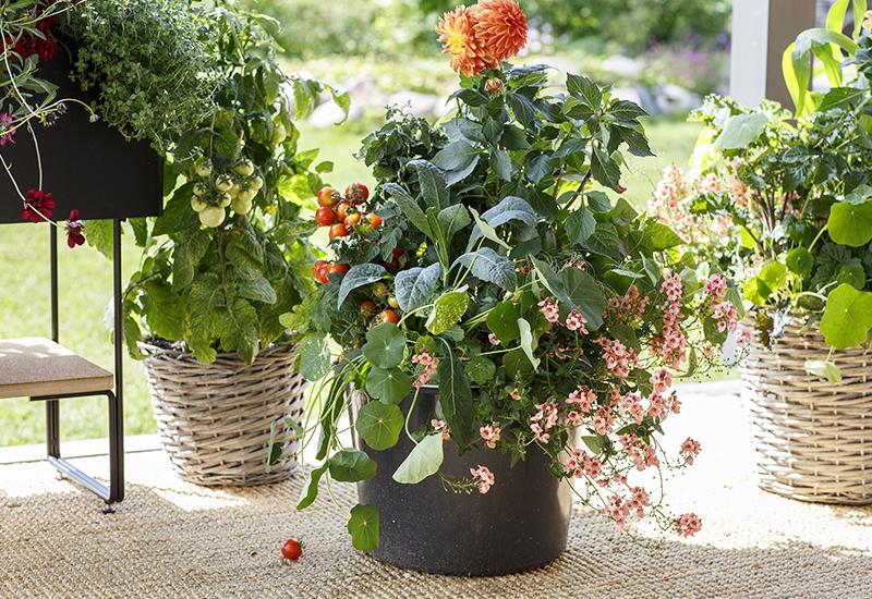 Enkla tips på hur du kan inreda din balkong med växter