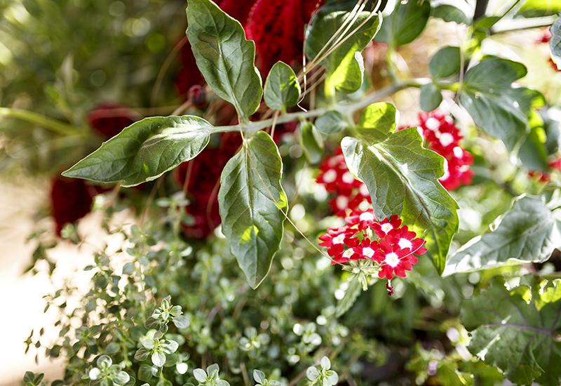 Fördelar med att kombinera olika typer av växter