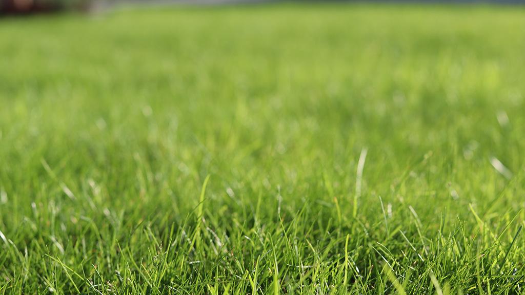 Tips om när du kan så gräs