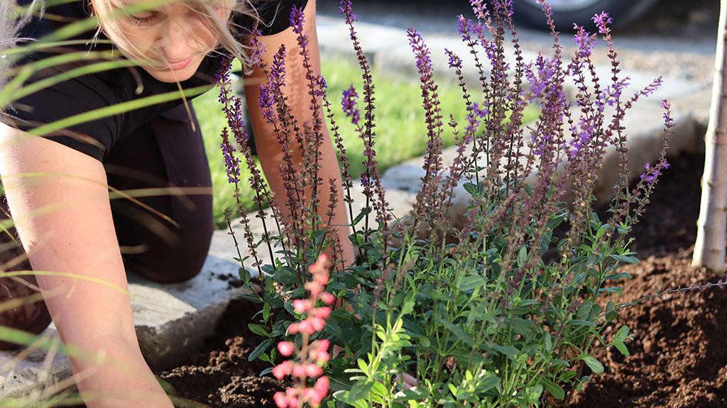 Råd för dig som vill förändra din trädgård