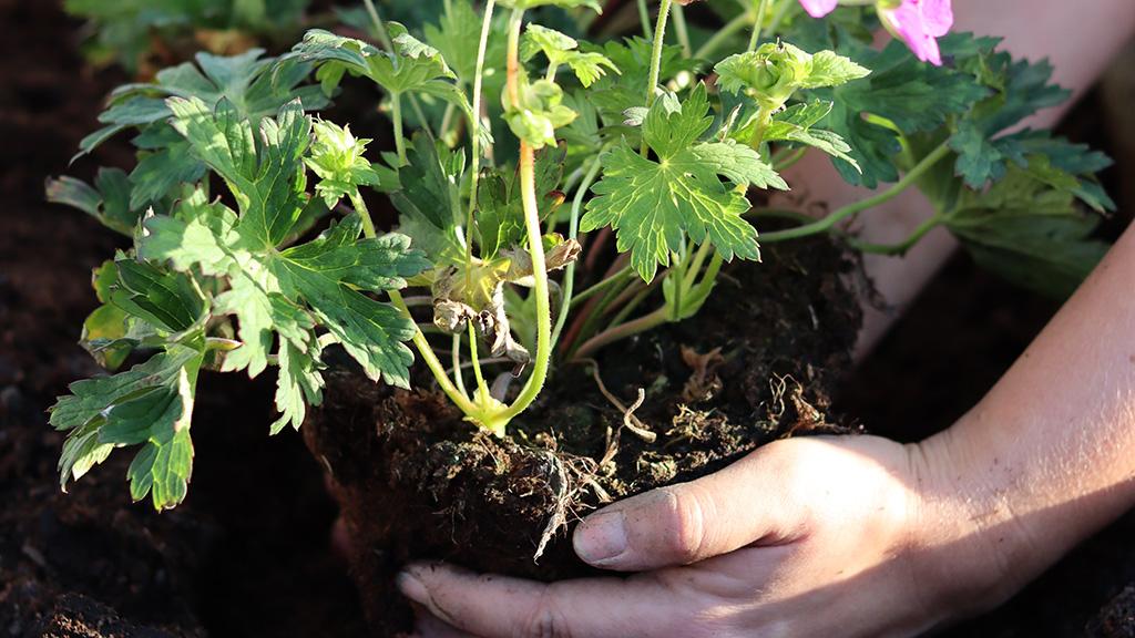 Information om trädgårdsanläggning och plantering