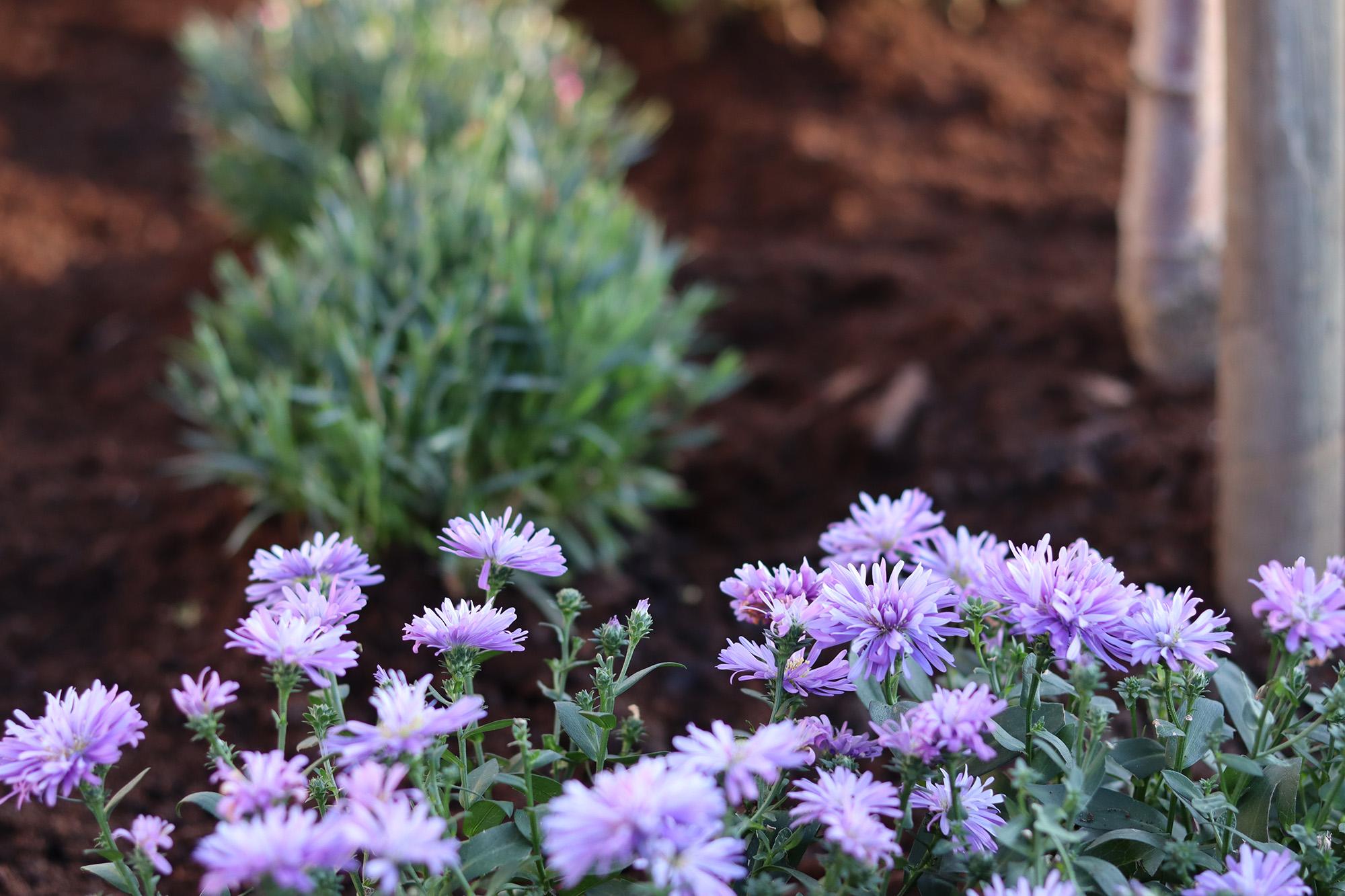 Tips på vad du kan tänka på när du ska anlägga en hel trädgård