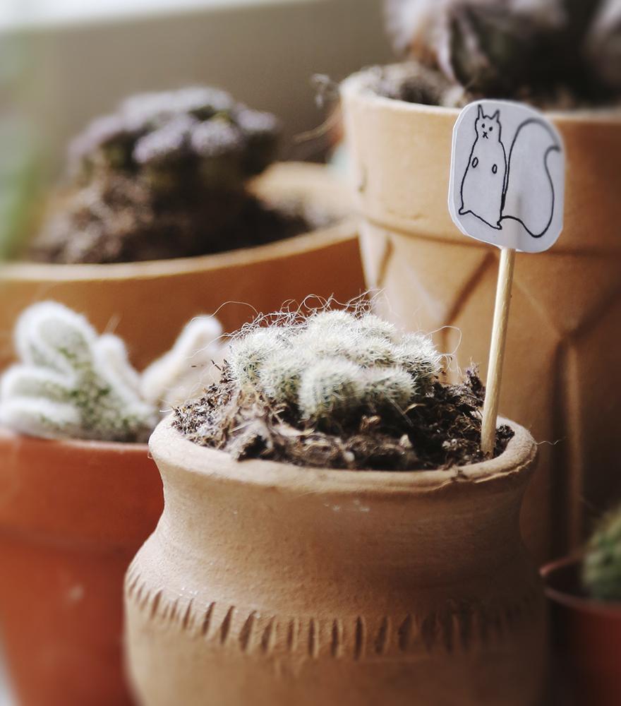 Skötsel till succulenter