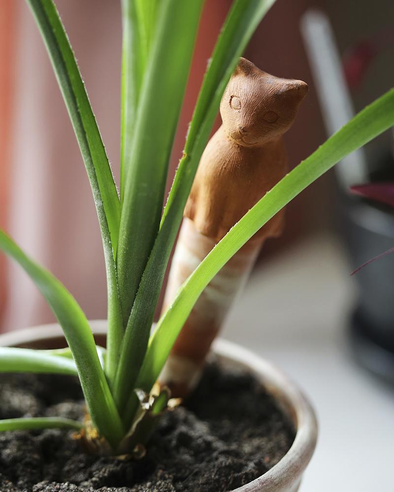 Odlingstips inomhusväxter