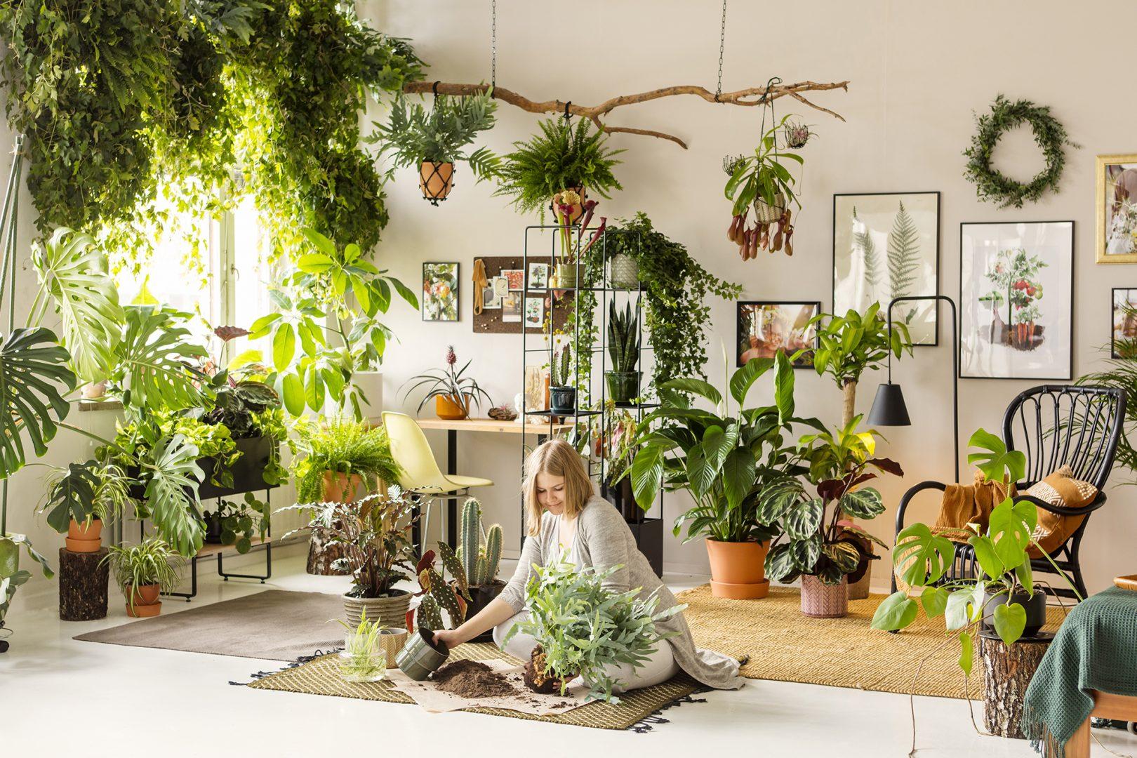 Tips och råd på hur du planterar gröna växter inomhus