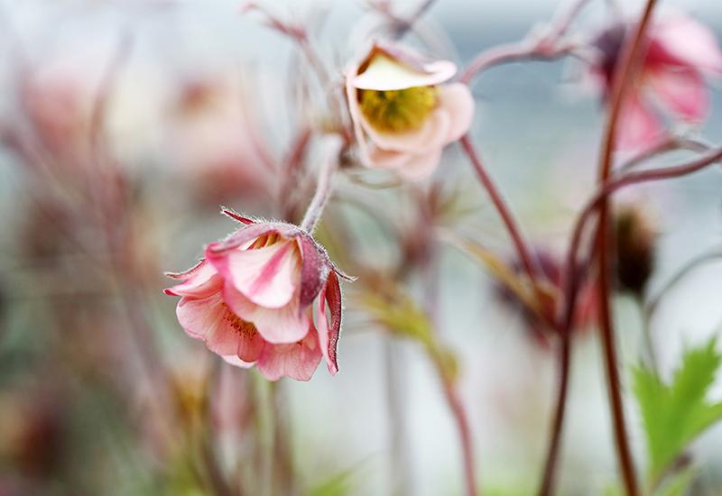 Inspiration och tips till blomval