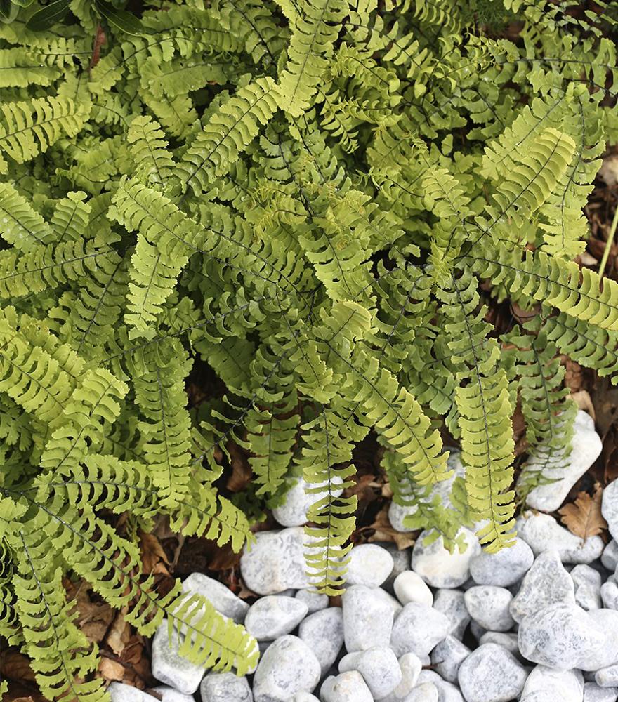 Inspiration till populära växter i trädgården