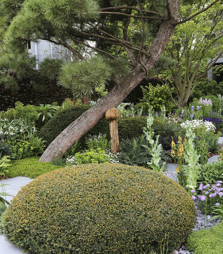 Skapa kontraster i trädgården med buskar och träd