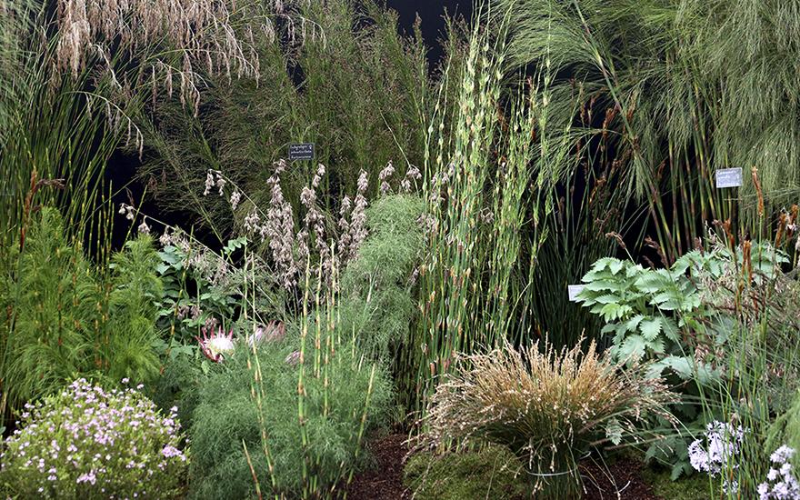 Kombinera olika sorter gräs