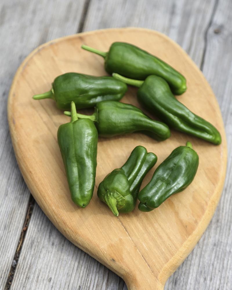 Tips på när du ska skörda din paprika