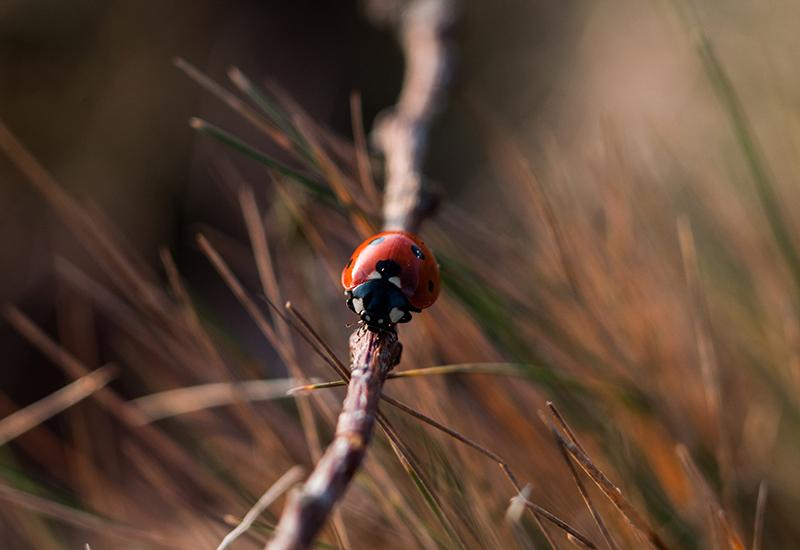 Fördelar med insekter och pollinatörer i trädgården