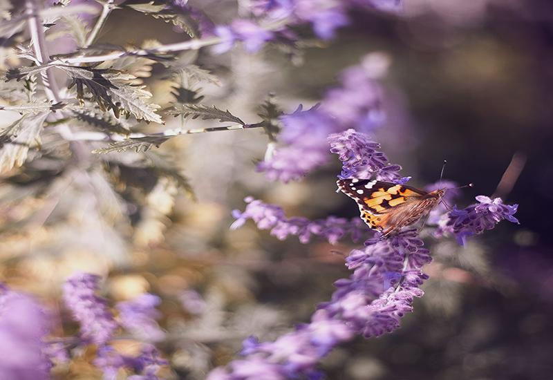 Fördelar med ett berikat djurliv i naturen och trädgården