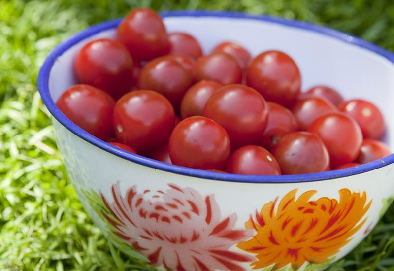 Tips på hur du ska gödsla dina tomater