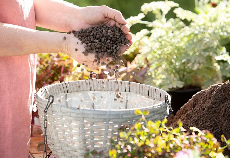 Tips och instruktioner på hur du får sommarblommor att trivas