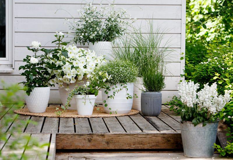 Inspiration till en plantering av vita sommarblommor