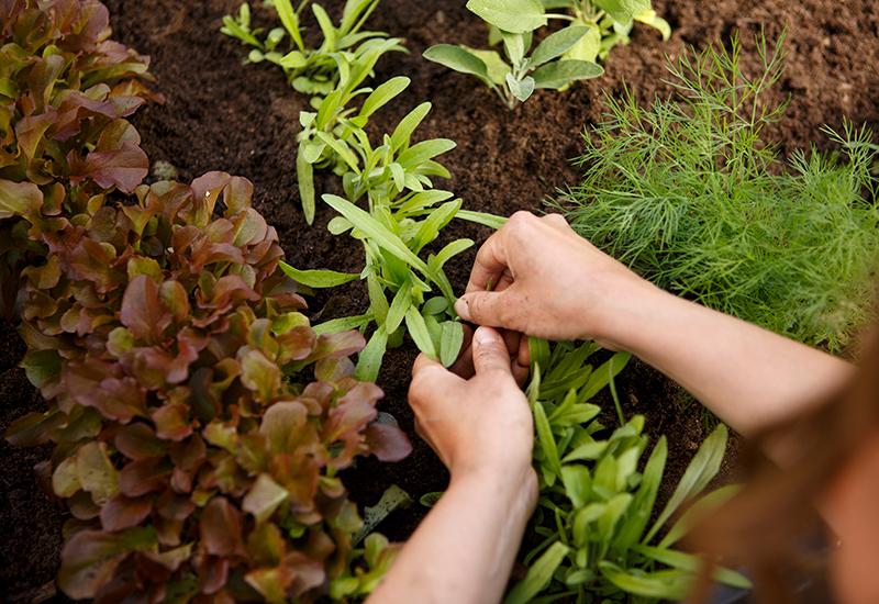 Fakta om hur man väljer rätt jord till sin plantering