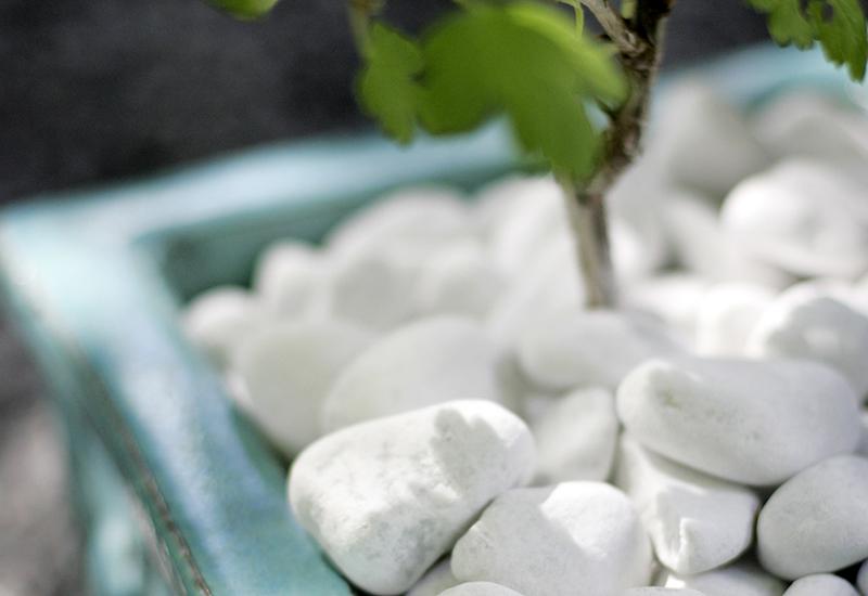 Dekorera din trädgård med täckmaterial som vit pebbles