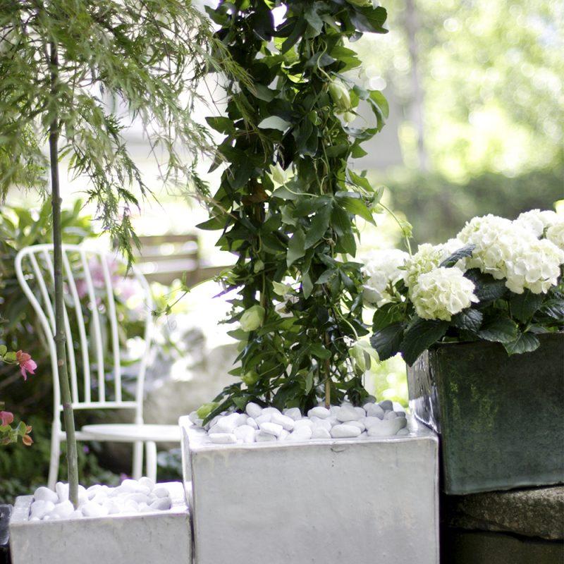 En vit Hortensia i en samplantering
