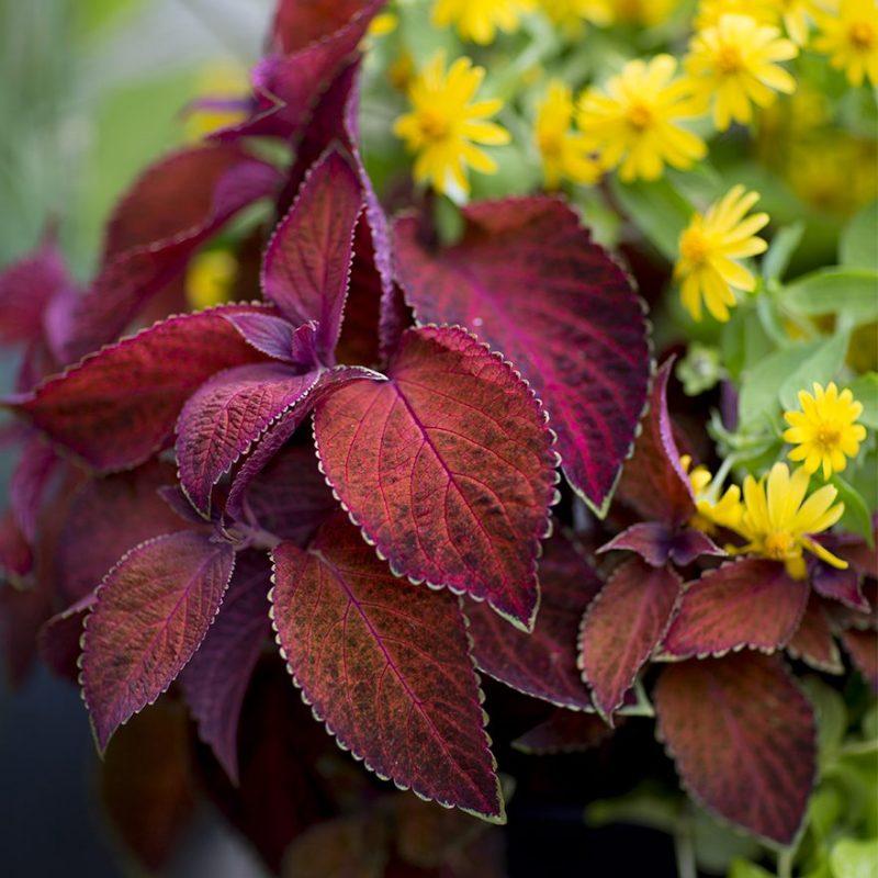 Roströd Palettblad med gula sommarblommor