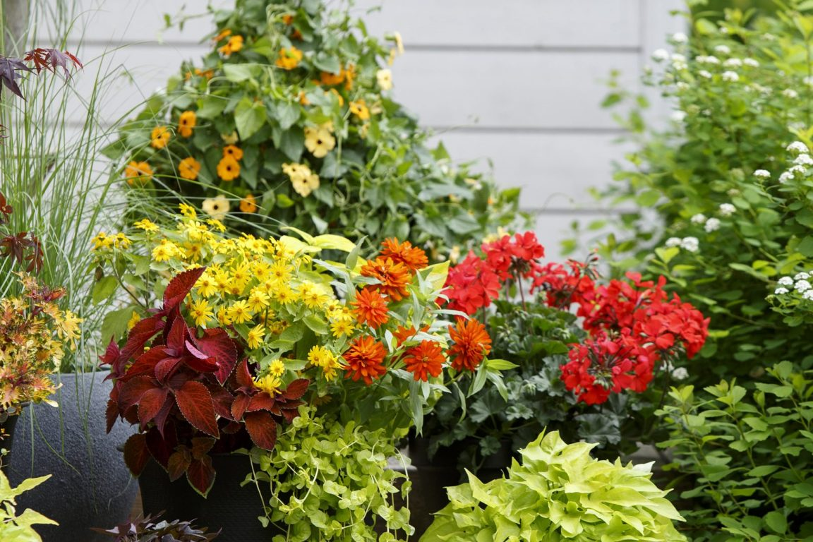 tips på hur du kan tänka när du ska välja växter och sen ska plantera
