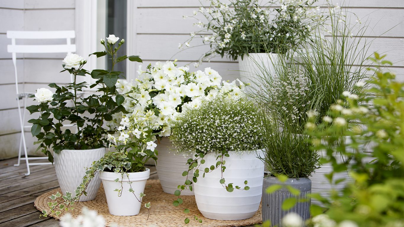 Inspiration till hur du kan skapa en harmonisk terass med vita blommor i kruka
