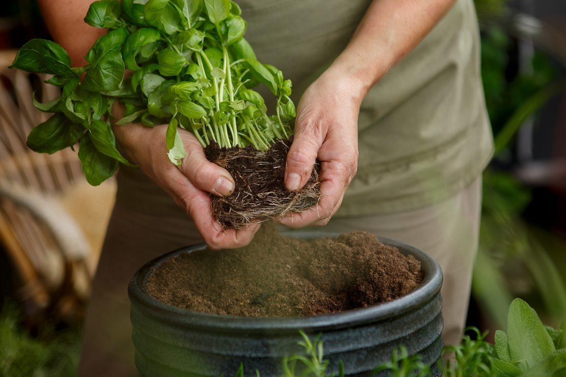 Enkla instruktioner och tips till dig som vill omskola dina växter