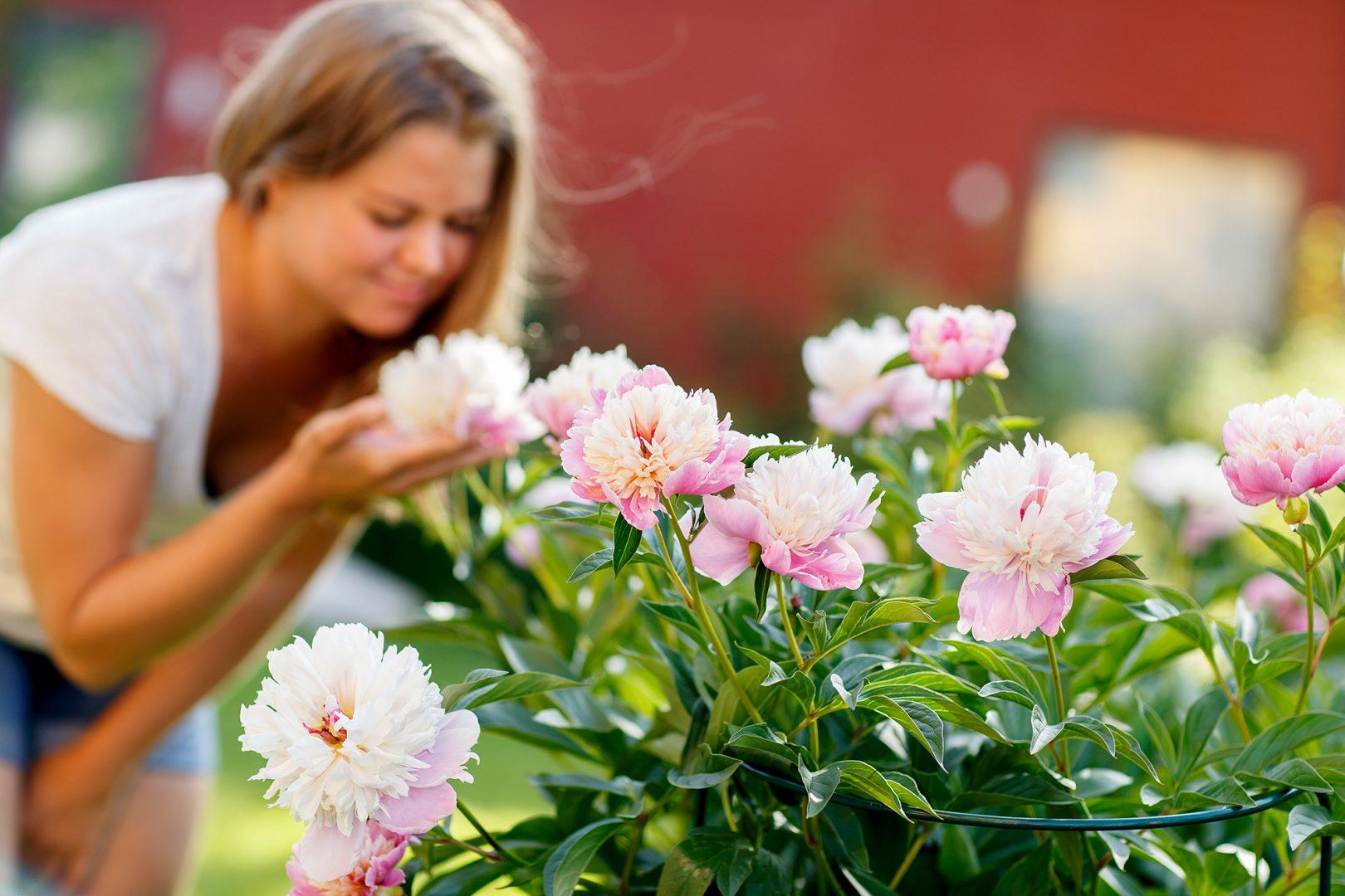 Tips och inspiration för dig som vill skapa din drömträdgård