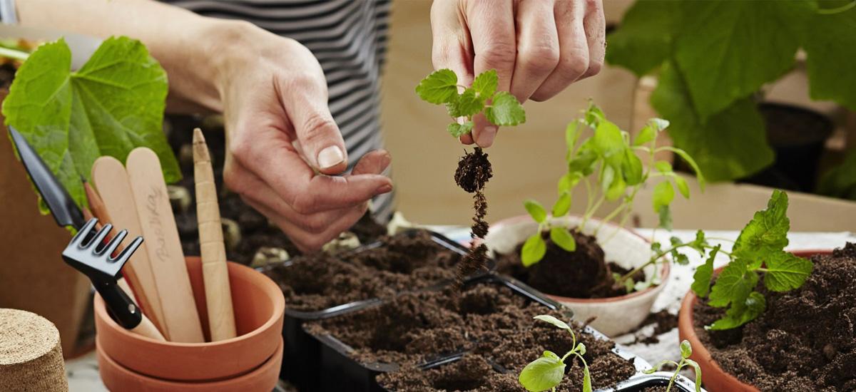 Instruktioner för dig som vill omskola dina plantor