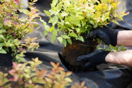 Anledningar till varför hösten är den bästa tiden att plantera