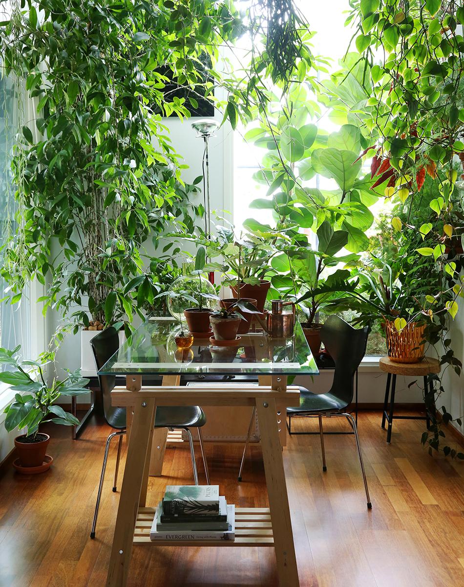 Med hjälp av grönska kan du skapa en tropisk atmosfär