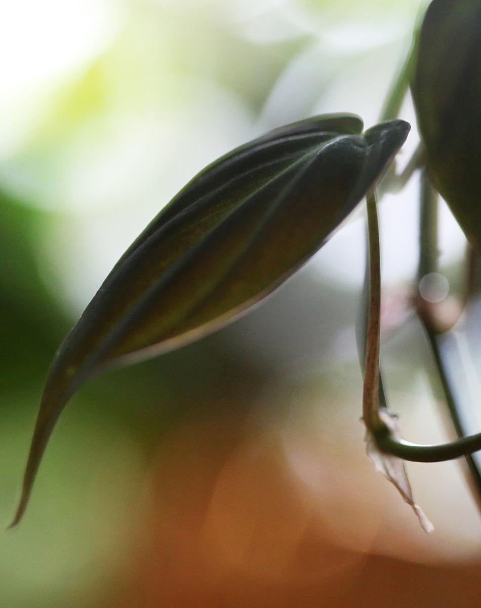 Här hittar du tips på vilka klätterväxter som lämpar sig bra vid inredning med grönska