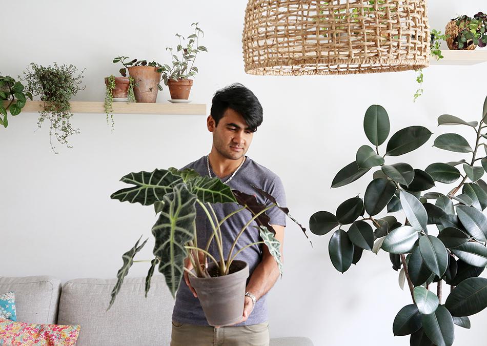 Tips på hur du kan tänka när du skaffar dig en ny växt hemma