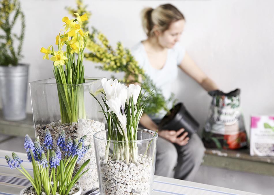 Här kan du läsa mer om planteringstips av vårlökar, exempelvis som att plantera i grupp