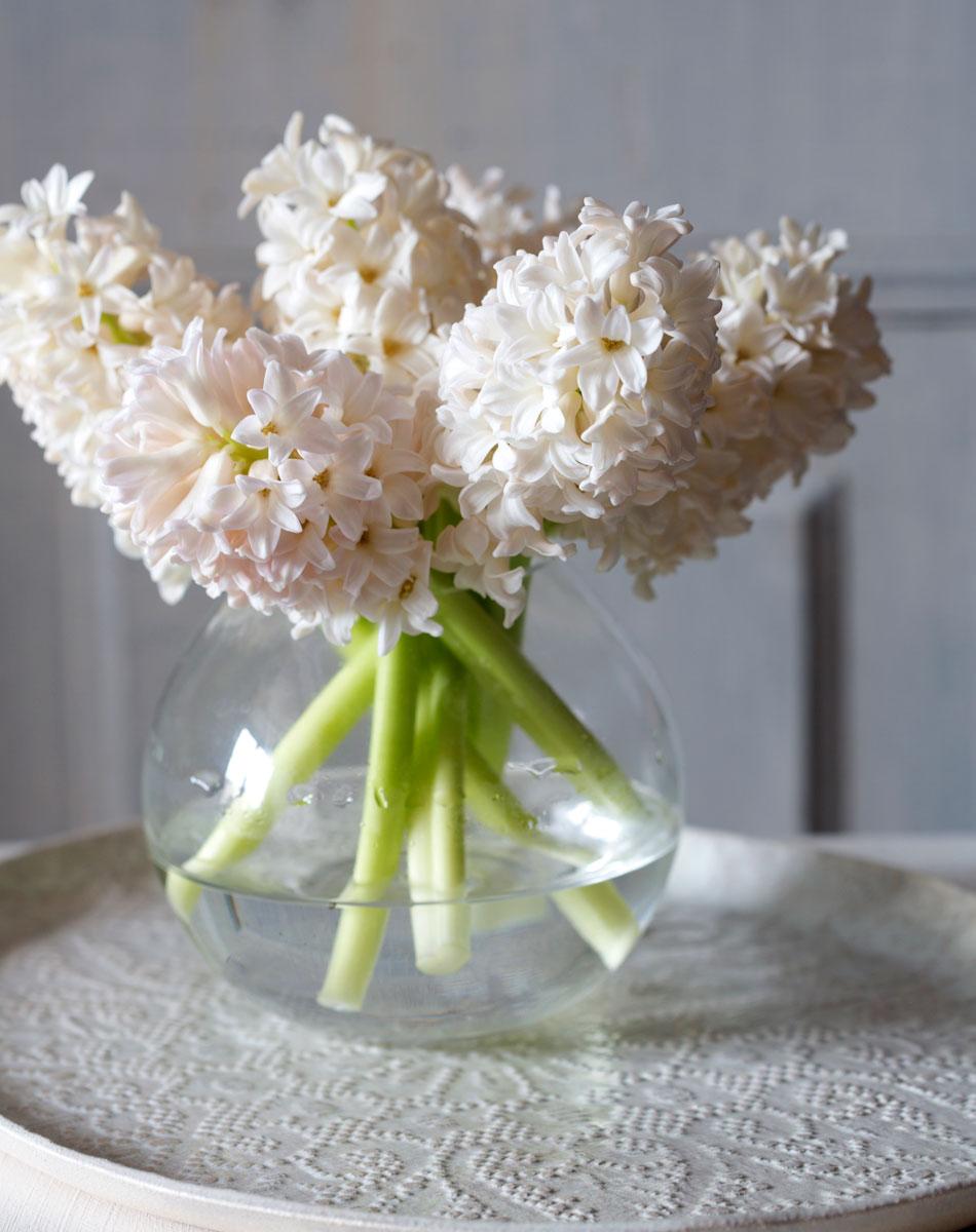 Bukett av vita hyacinter i glasvas