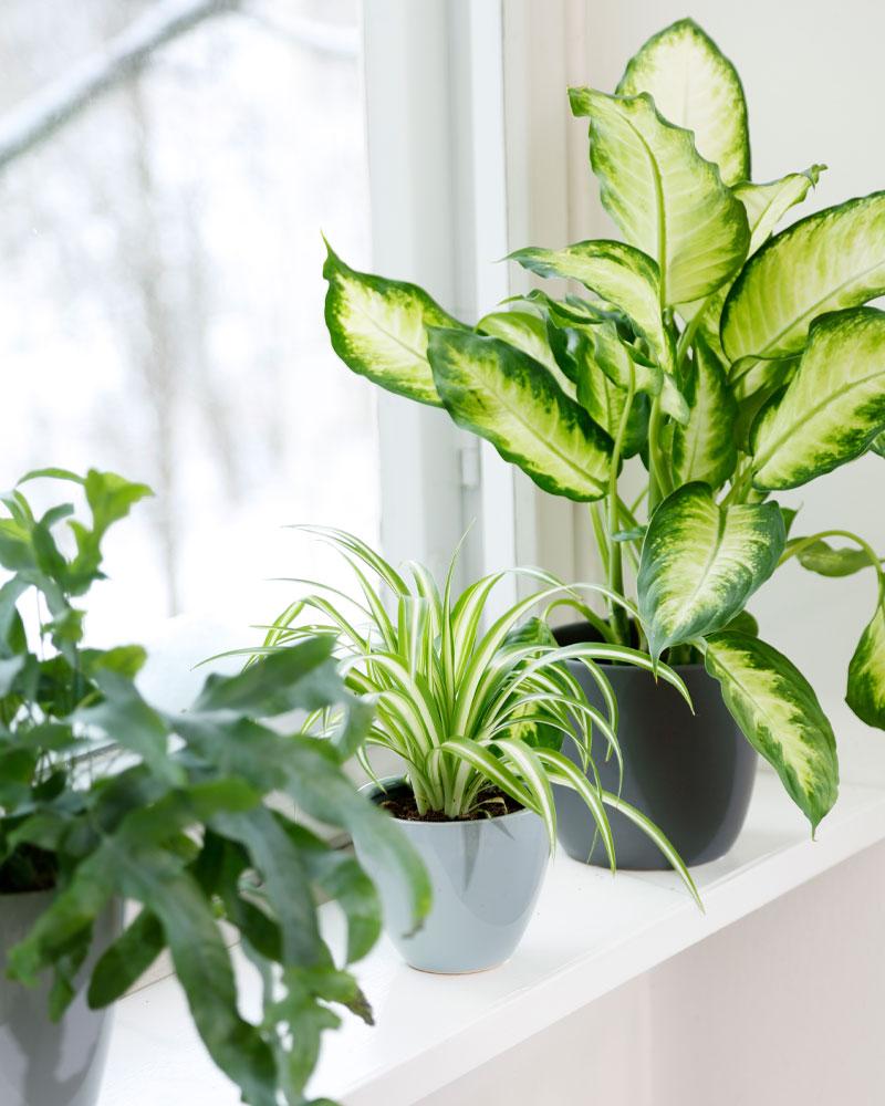 Gröna växter på fönsterbräde