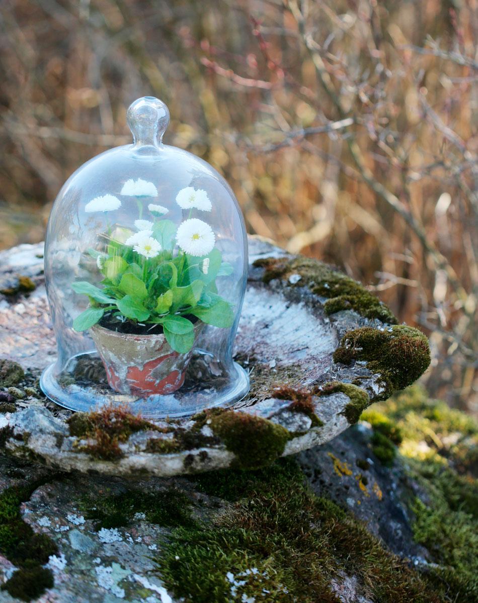 Krukväxt under glaskupa