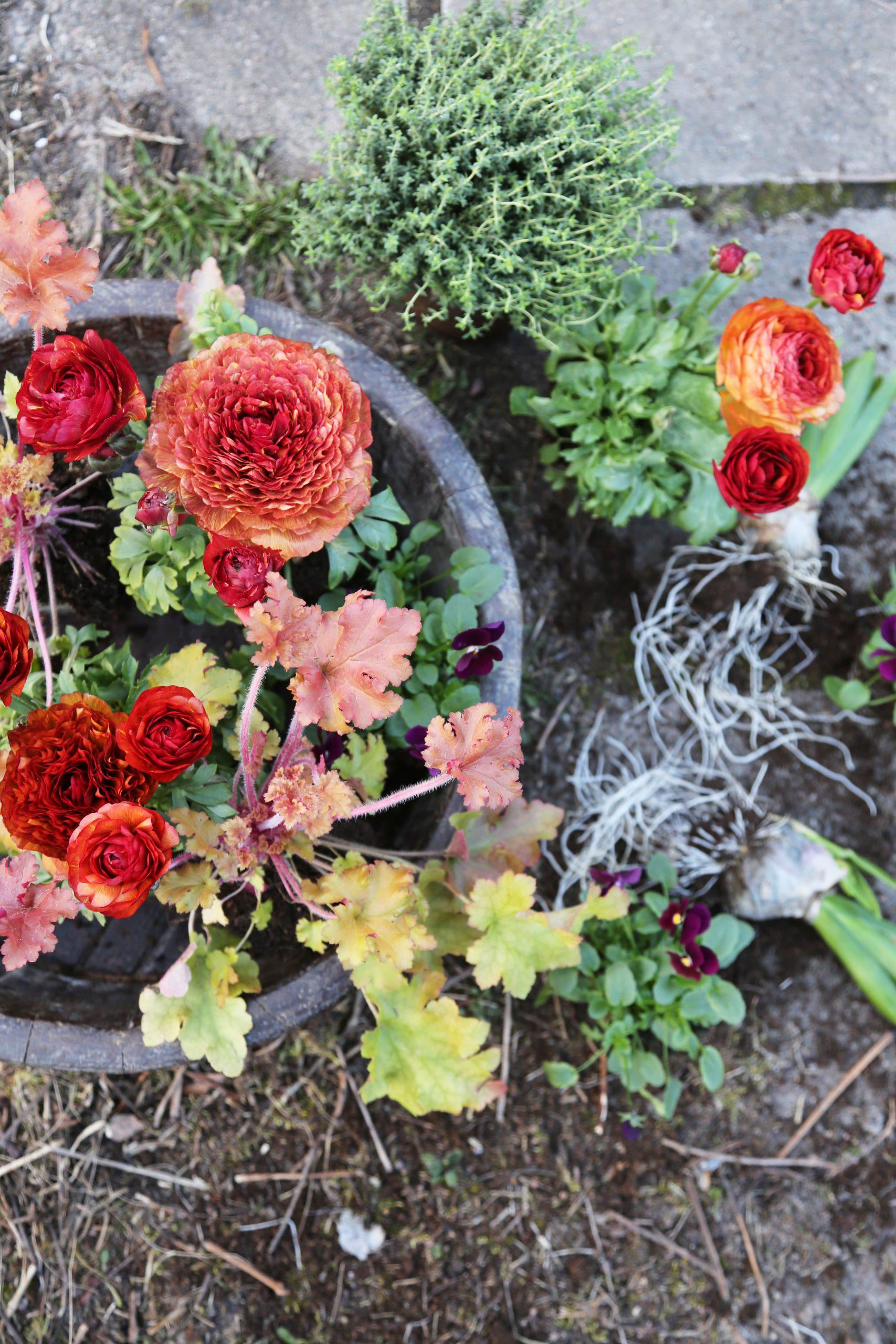 Färgglada krukväxter