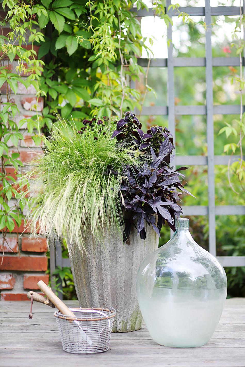 Krukplantering, vas i glas och en korg