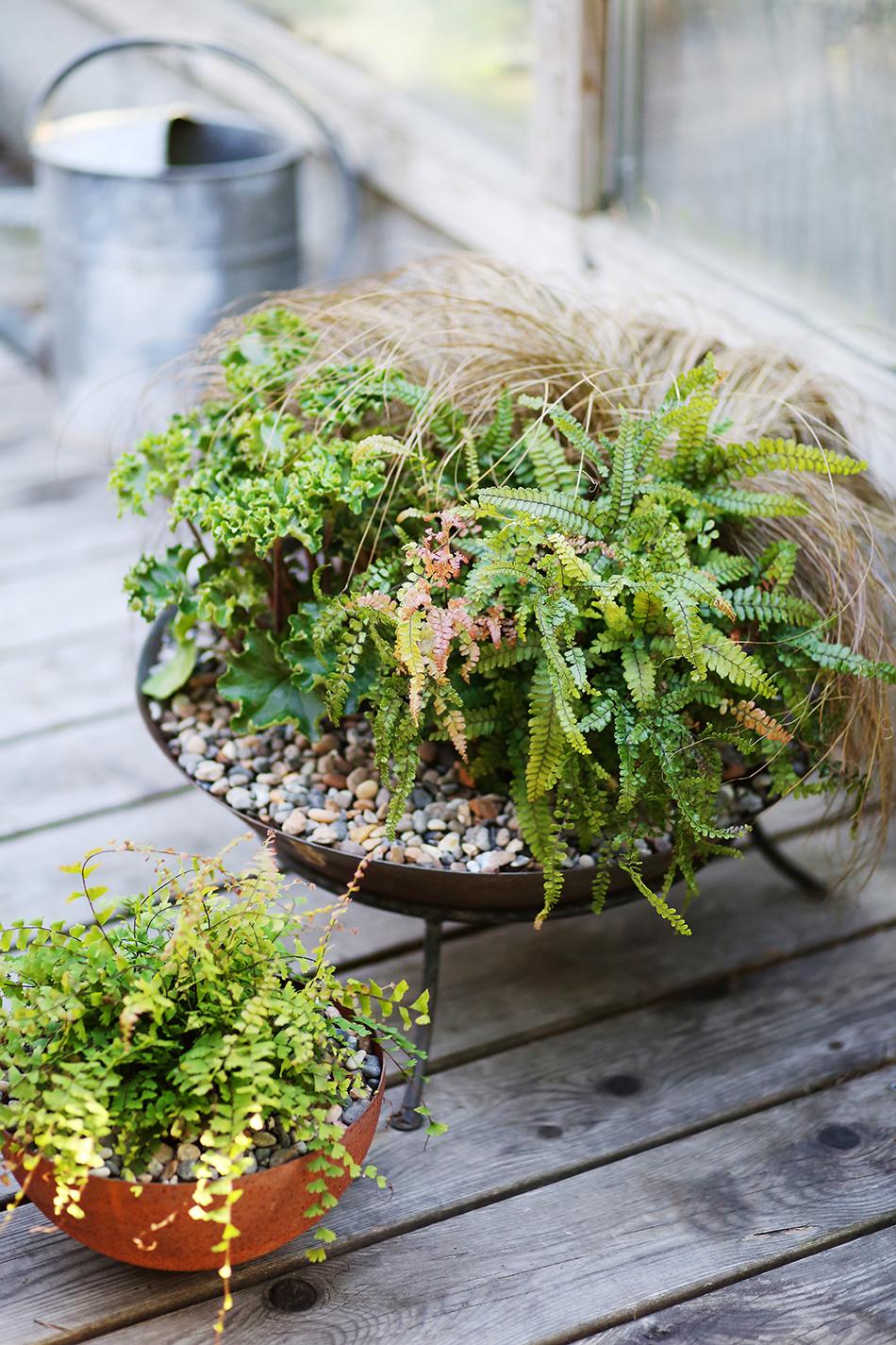 Krukplanteringar med bladväxter och dekorativa stenar