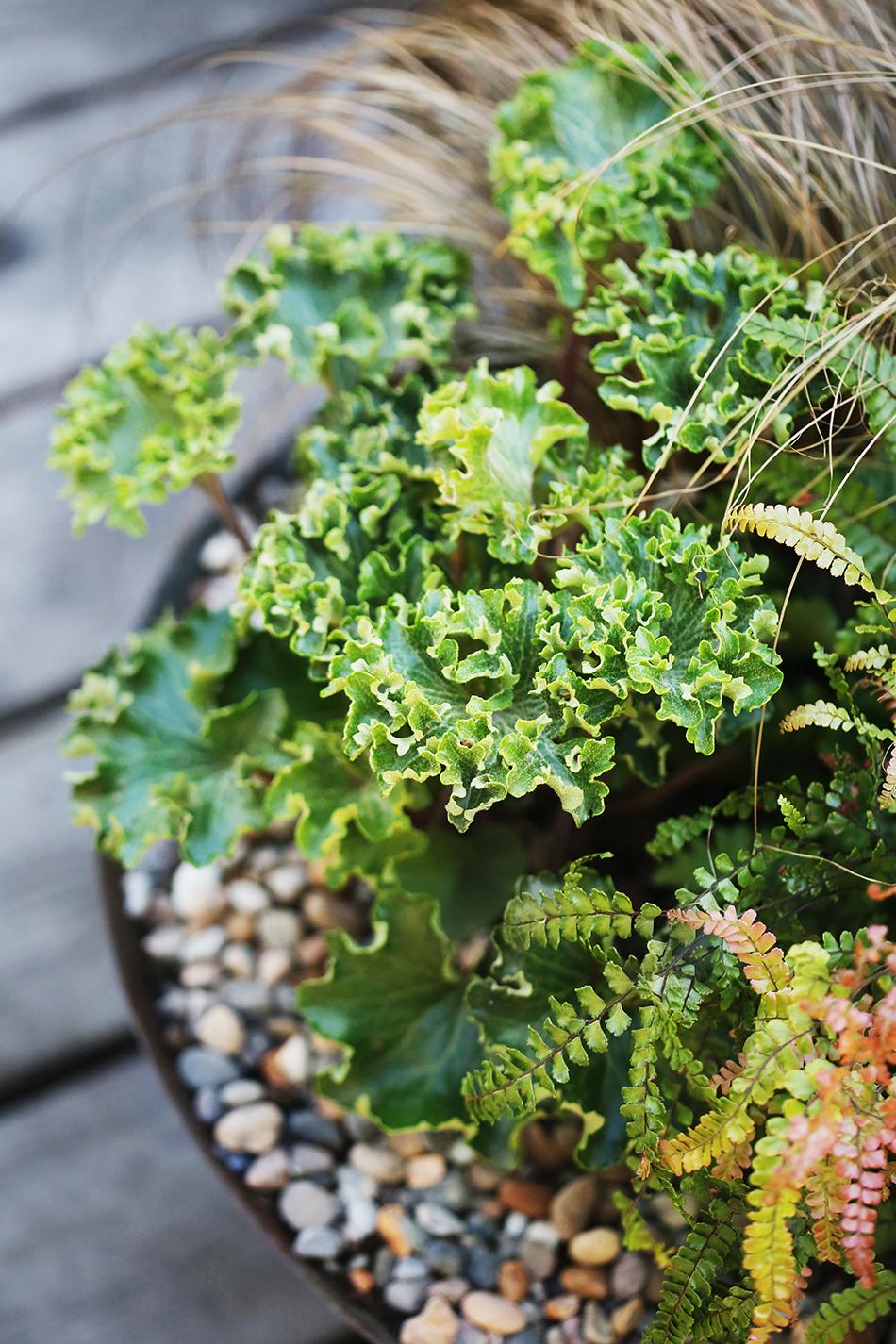 Krukplantering med gräs, bladväxt och dekorativa stenar