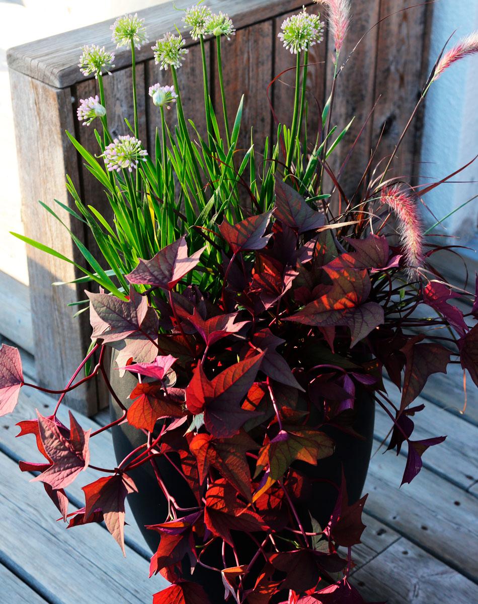 Romantisk plantering i kruka