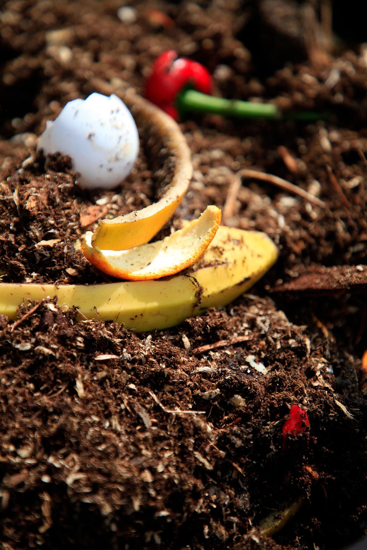Kompostmassan kan bestå av fruktrester och äggskal